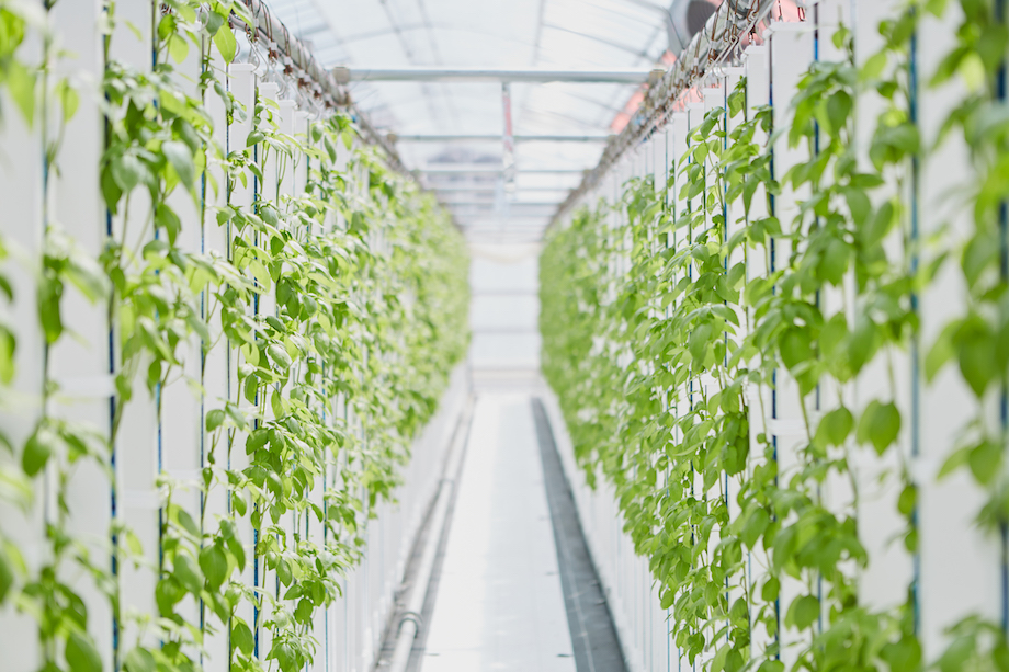 GRHD×DMM「Veggie_Works」モバイル農業ユニット「One Farm」