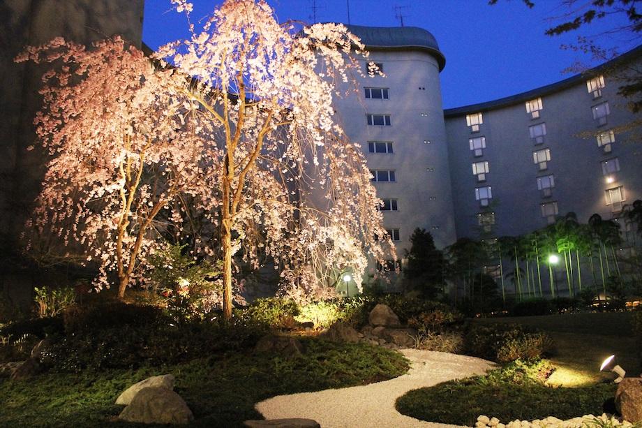 国立京都国際会館の桜鑑賞&建築ガイドツアー付きプラン