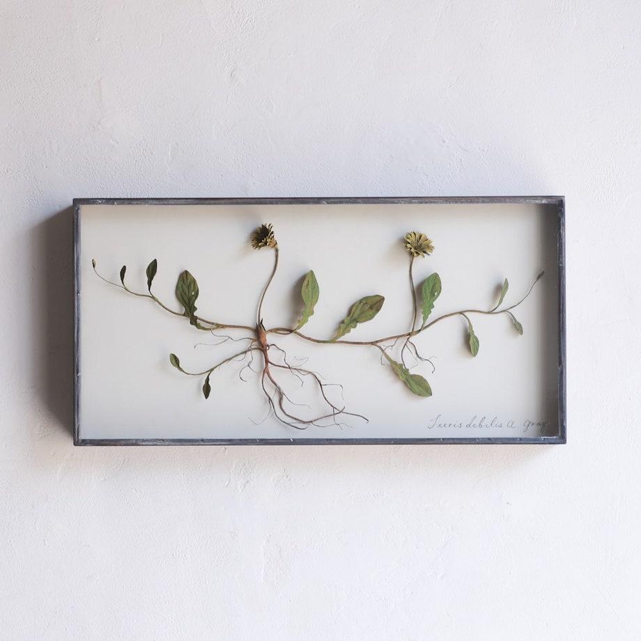 """モリソン小林 作品展""""small plants"""""""