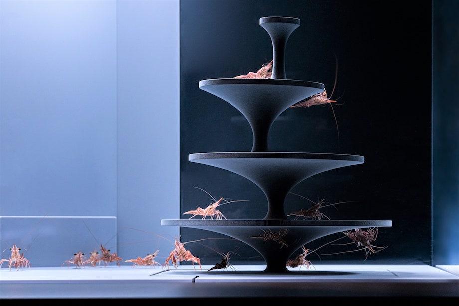 京都水族館 企画展「カタチとくらし」