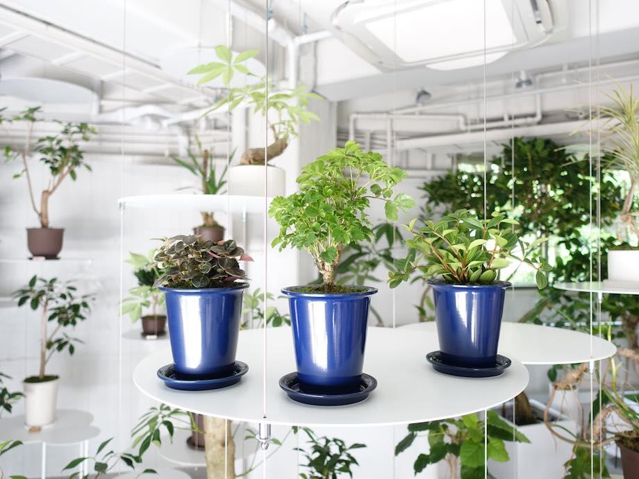 観葉植物専門店 REN